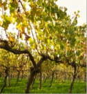 Winery Tour Package